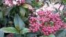 l-burbank-gardens