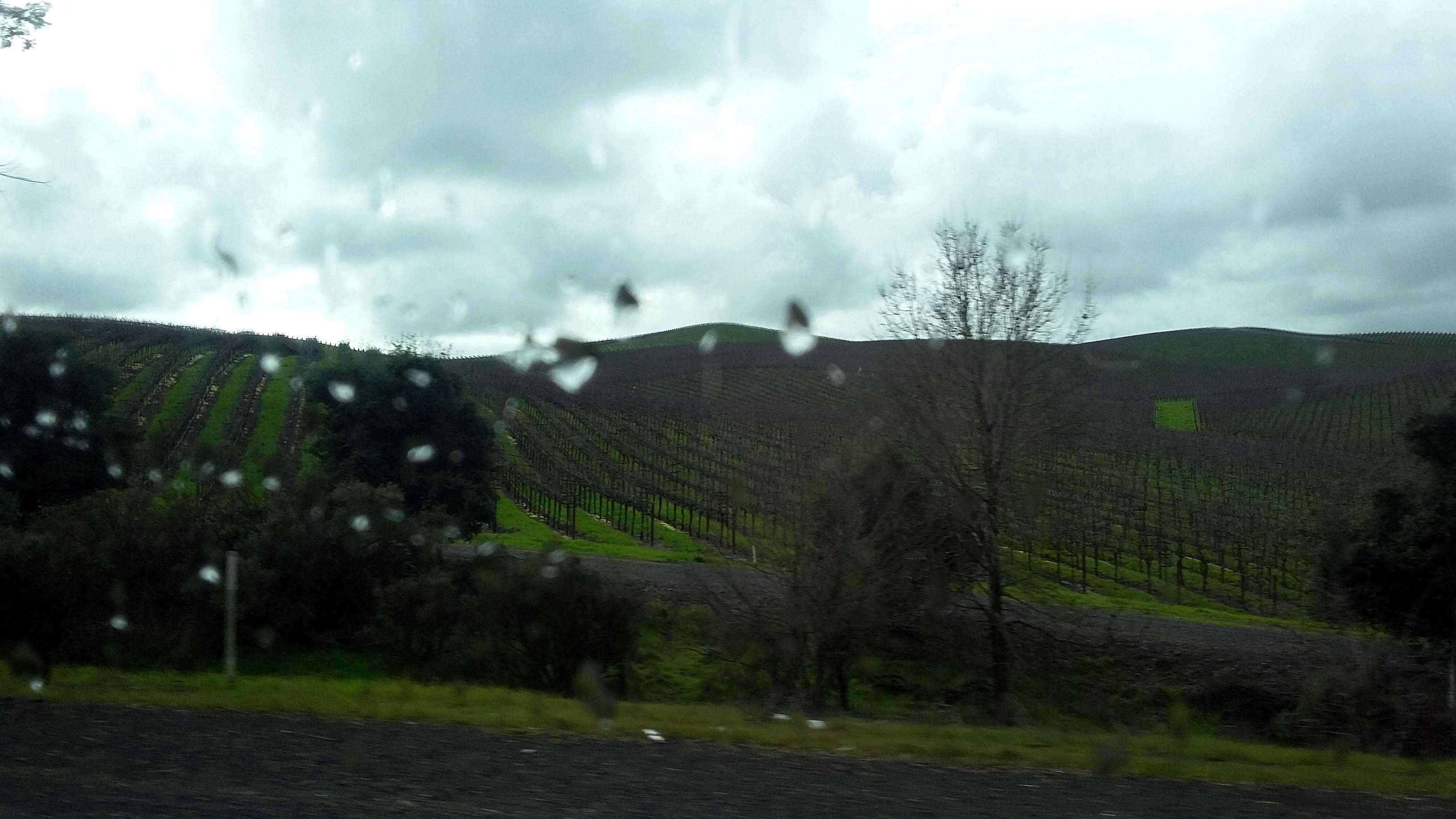 rain-vineyards