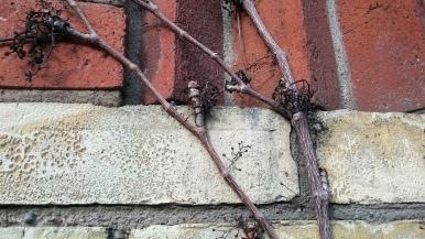 Toronto Brick & Ivy