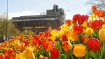 Spring in A'dam2