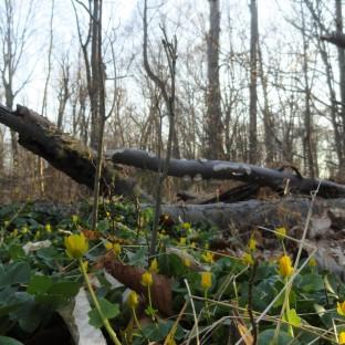 Northern Spring 3