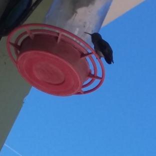 170725 hummingbid feeder