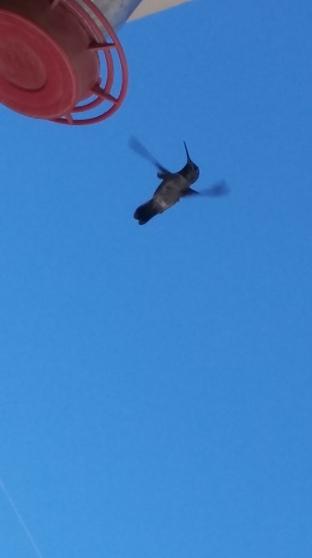 170725 hummingbird & feeder