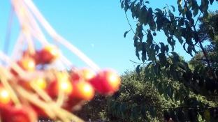 170928 Annadell Trees & Moon