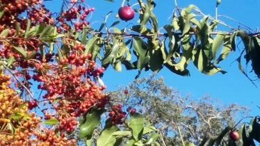 170928 Annadell Trees