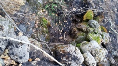 171112 Annadel gully burned & unburned stones