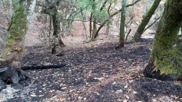 171112 Annadel moss & charred trees