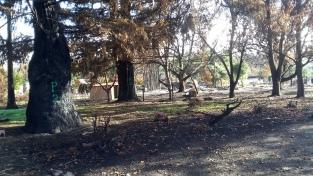 Blackened Tree Trunks