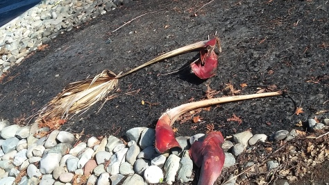 Scorched Earth & Palm Fronds