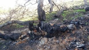 171211 destroyed tree