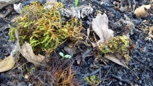 171211 moss & ash-charcoal