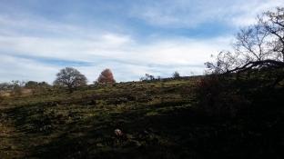 171211 post-burn hillside annadel