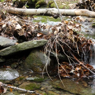 Wachusett Mtn Stream 1