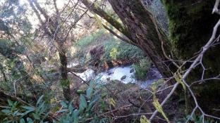 180130 SR Creek