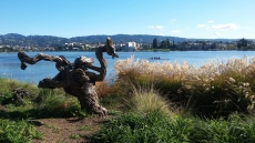 Lake Merrit Gnarly Tree