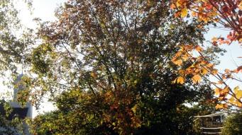 1710 Skaneateles foliage 1