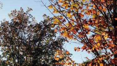 1710 Skaneateles foliage 2