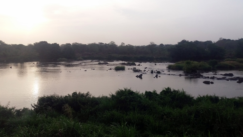 180406 At Least Two Hippos Visible