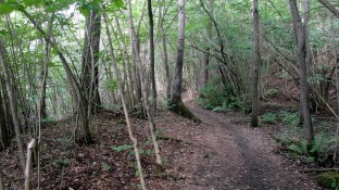 1806 Forest Trails Vettre 1