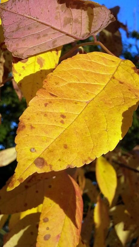 171012 NJ autumn