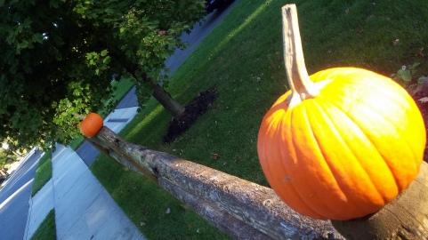 171017 NJ autumn 4
