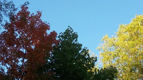 171018 NJ autumn