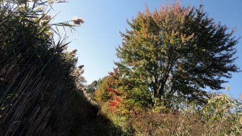 171020 NJ autumn 2