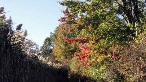 171020 NJ autumn 3