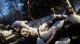 1712 Snowy Cherry 1