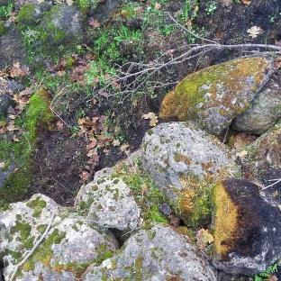 171211 Anndel gully week 7