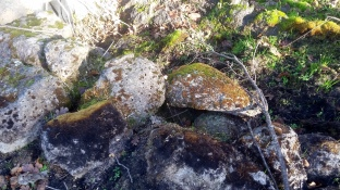 180101 Anndel gully week 10