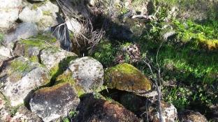 180130 Anndel gully week 14