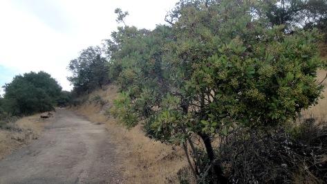 1810 Annadel Canyon Trail