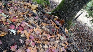 1810 Annadel Leaves & Moss