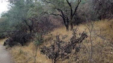 1810 Canyon Trail Post-Burn