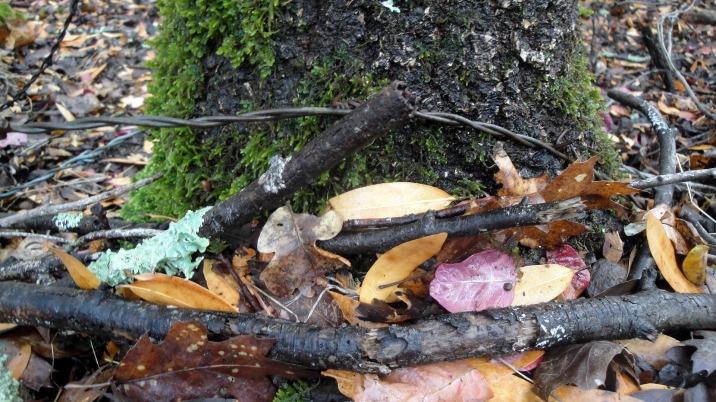 Annadel Leaves & Moss 2