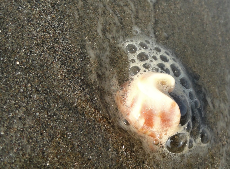 bubbly shell fragment