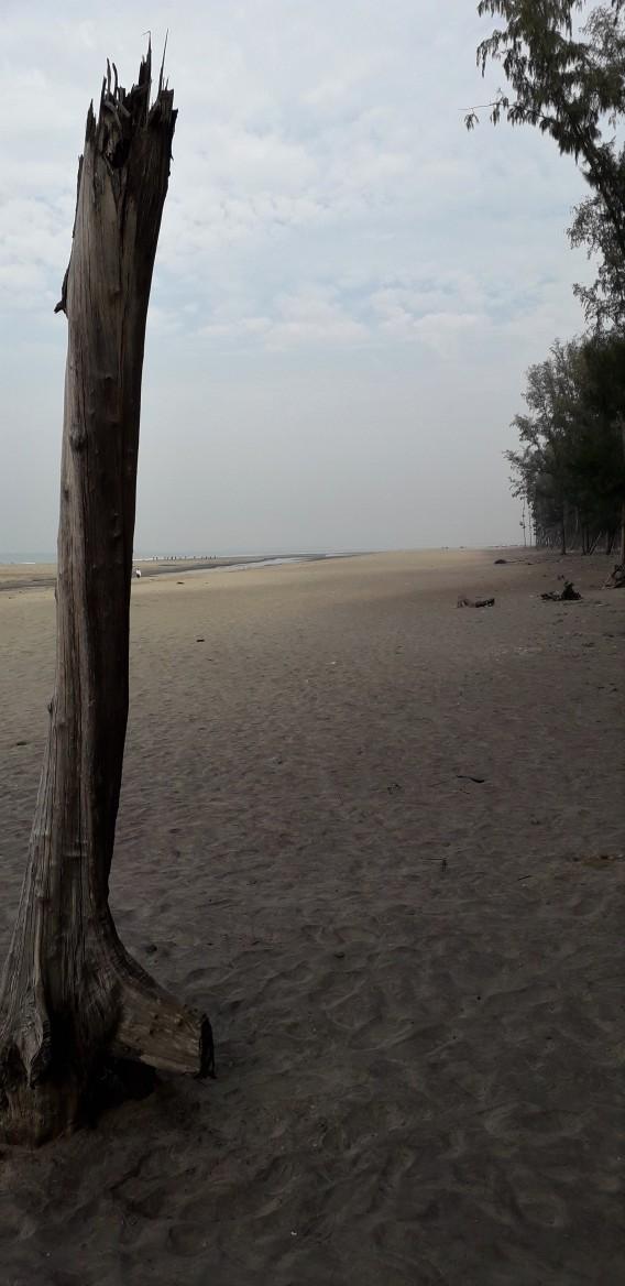 cox's beach trunk