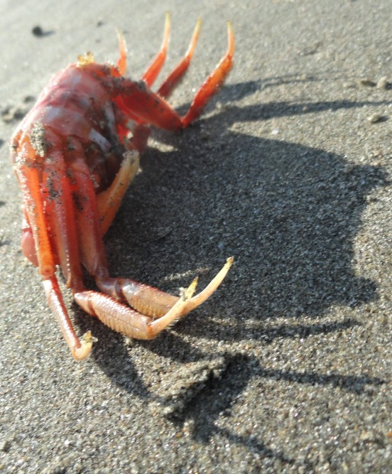 ex-crab