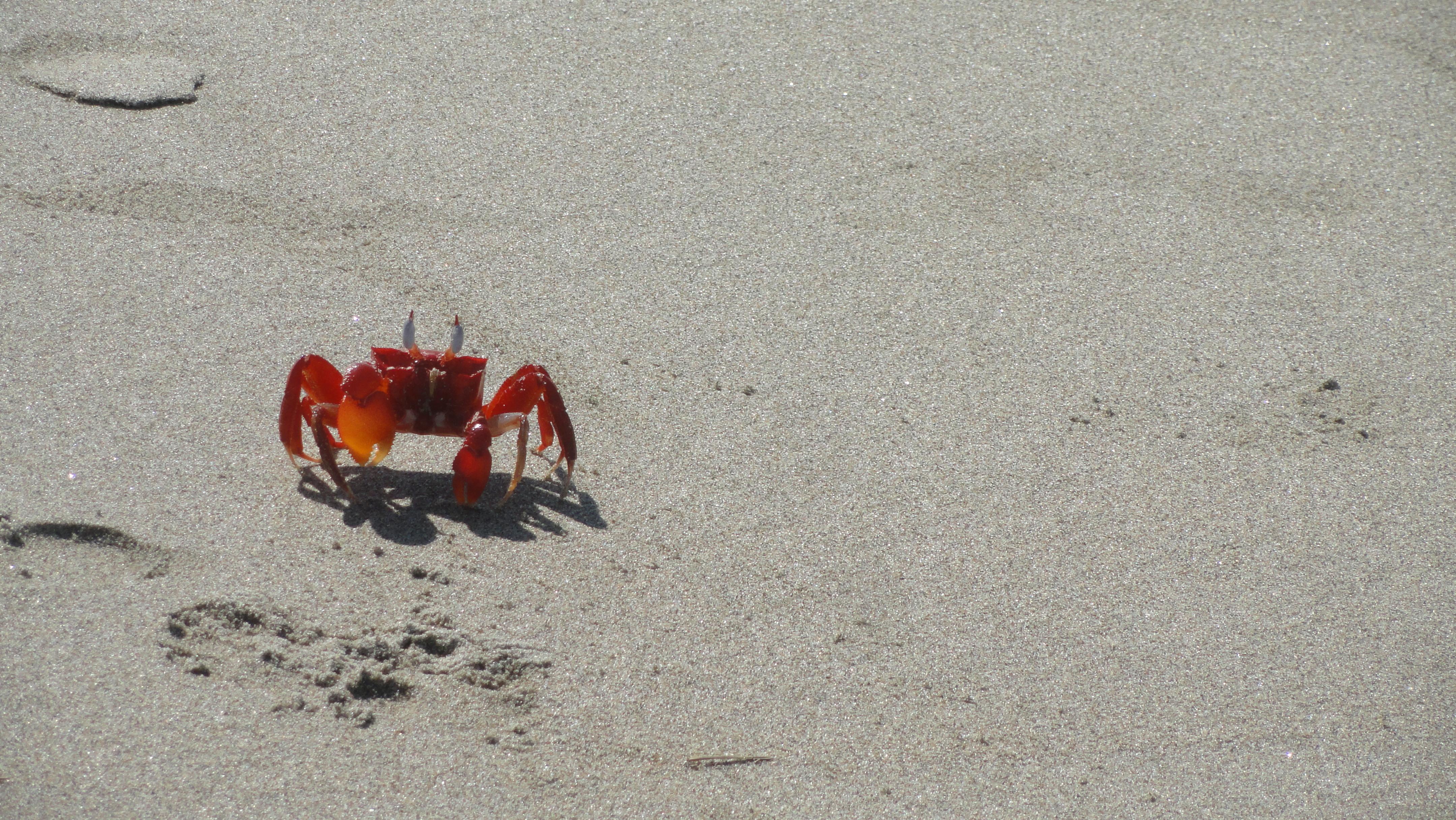 sandcrab26footprints