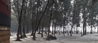 Beachside Trees