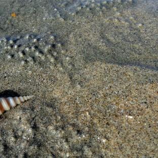 Cox's Beach Sand & Shell