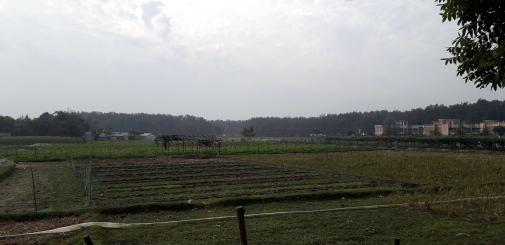 Cox's Fields