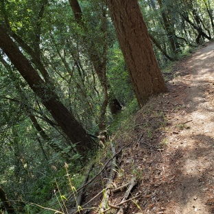 190716 Annadel Trail and Canyon