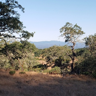 190716 Sugarloaf seen from Annadel 2