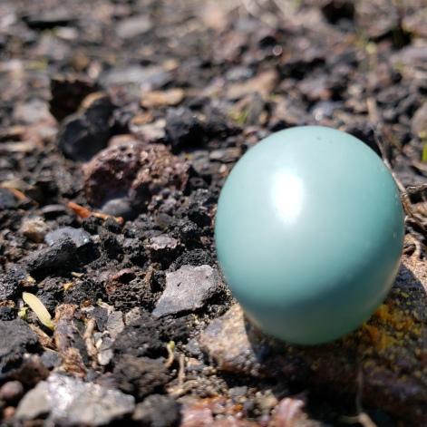 190506 Fallen Egg 2
