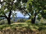 190602 Green Trees Early DrySeason