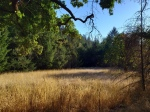 191005 Grass & Trees from Gunsight Rock Trail2