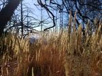 191005 Grass & Trees Gunsight RockTrail
