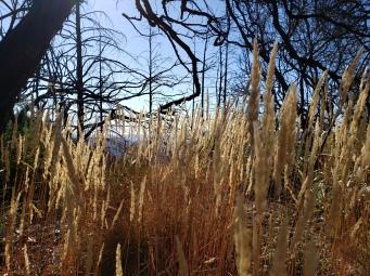 191005 Grass & Trees Gunsight Rock Trail